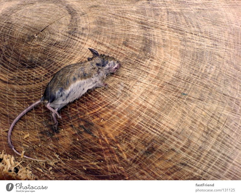 Day at the beach Death Wood Tree stump Calm Rodent Pattern Animal Wood flour Mammal Grief Distress Transience Mouse case of death as dead as a doornail
