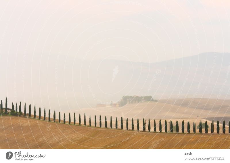 Everything's fine Environment Nature Landscape Earth Sand Storm clouds Summer Bad weather Fog Plant Tree Cypress Field Hill Val d'Orcia Tuscany Italy Street