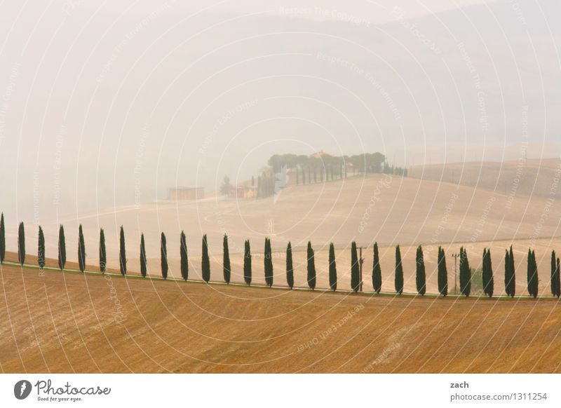 Everything's fine Environment Nature Landscape Earth Sand Storm clouds Summer Bad weather Fog Plant Tree Cypress Field Hill Tuscany Italy Street Lanes & trails