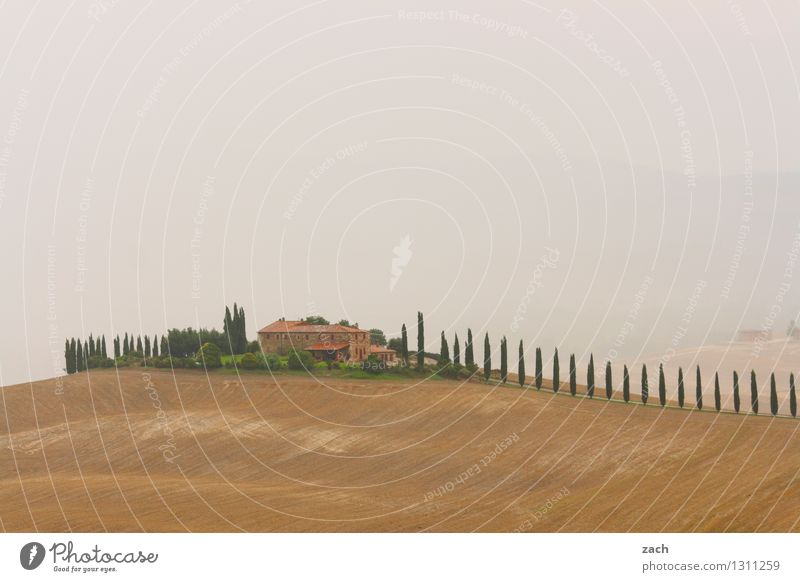 feel-good oasis Landscape Earth Sand Sky Clouds Storm clouds Bad weather Fog Rain Thunder and lightning Drought Plant Tree Cypress Field Hill Italy Tuscany