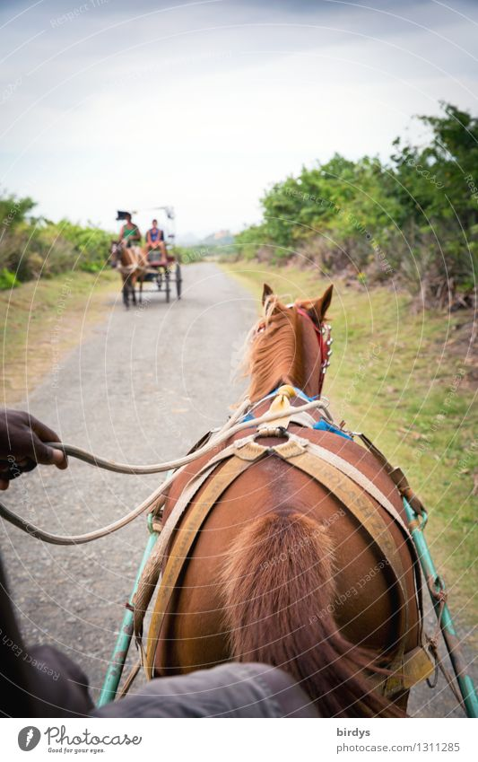 Human being Vacation & Travel Plant Landscape Clouds Calm Street Movement Natural Time Contentment Authentic Speed Network Driving Horse