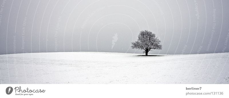 Sky Tree Winter Snow Horizon Individual Snowflake Undulating