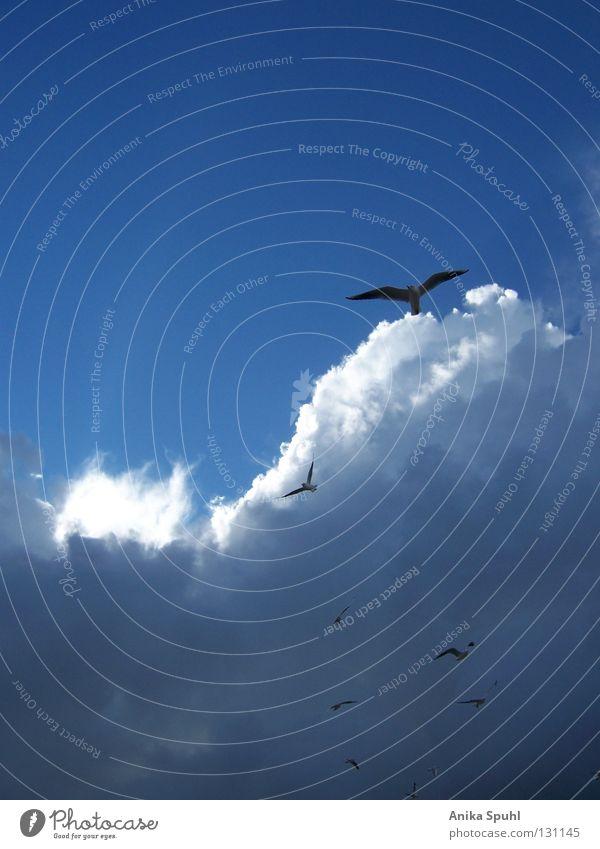 Sky White Sun Blue Beach Clouds Far-off places Freedom Bright Bird Coast Flying Free Group of animals Baltic Sea Black-headed gull