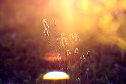Nature Plant Summer Sun Relaxation Landscape Calm Environment Grass Happy Moody Contentment Power Energy Warm-heartedness Belief
