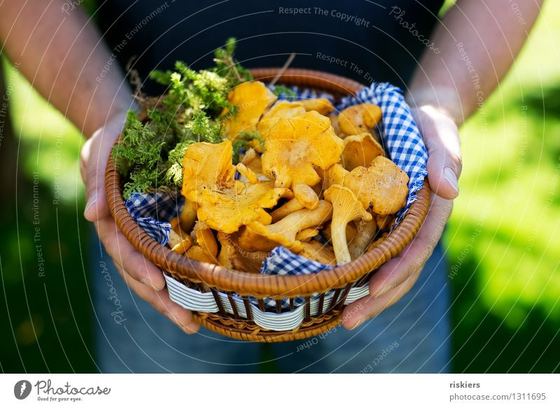 Dinner :) Human being Masculine Man Adults Summer Autumn Beautiful weather Moss Mushroom Chanterelle To hold on Yellow mushroom pick Basket Brunch Colour photo