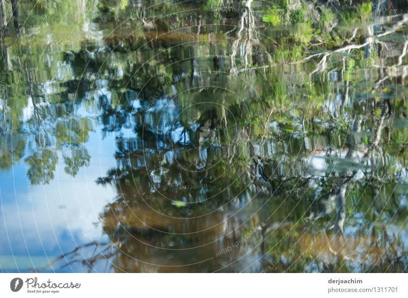 An outback river. Very nice reflection. Branches and twigs are reflected from a tree. Exotic Calm Trip Environment Nature Water Summer Beautiful weather Bushes