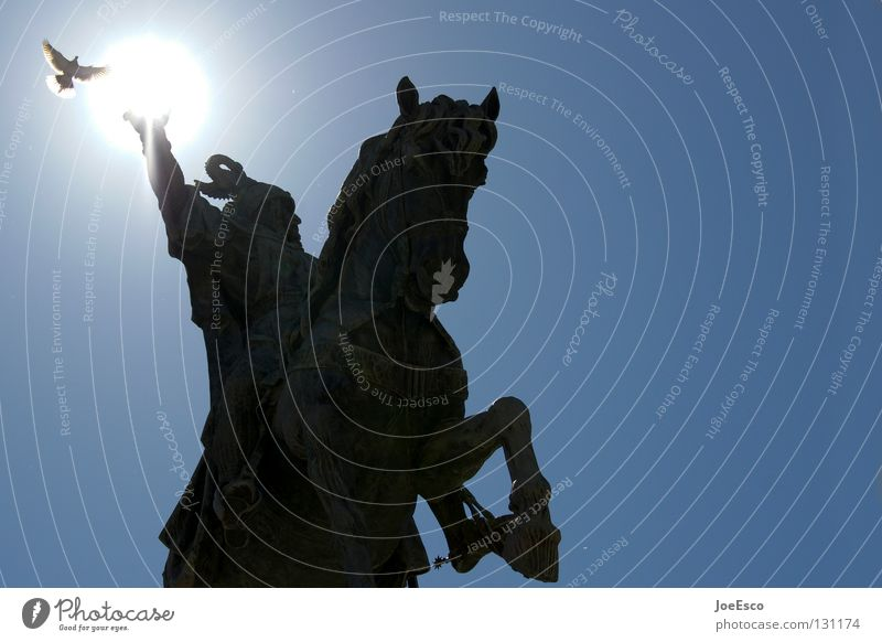Sky Sun Vacation & Travel Black Animal Bird Flying Railroad Horse Europe Perspective Threat Travel photography Strong Statue Wild animal