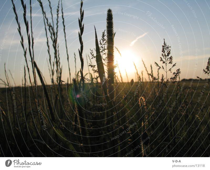 Evening Field Nature Sun