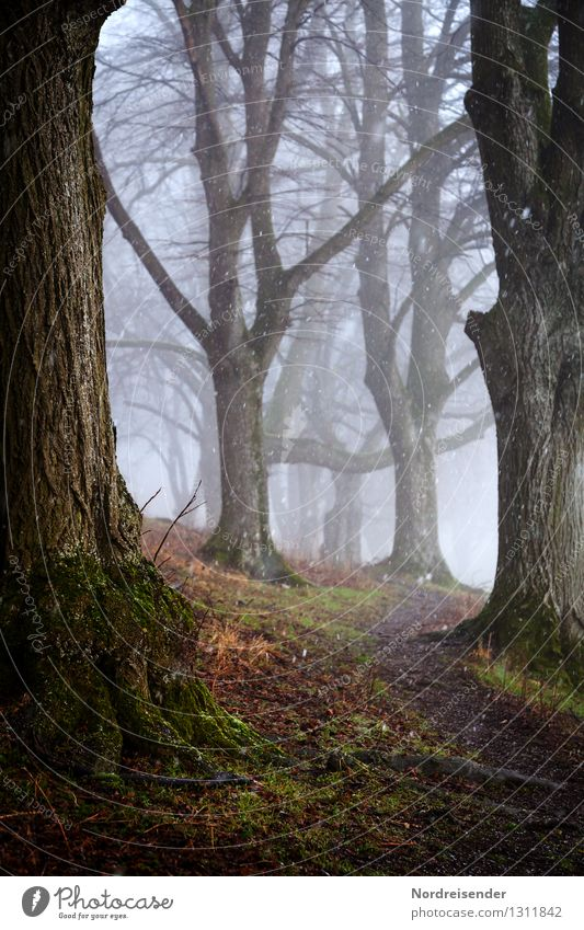 Nature Plant Tree Loneliness Landscape Calm Winter Dark Forest Autumn Lanes & trails Time Rain Snowfall Fog Hiking