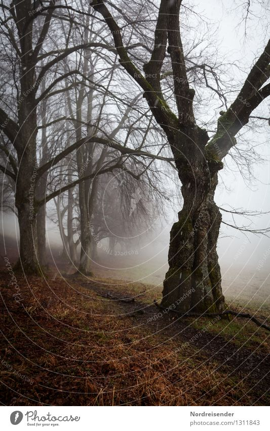 Nature Plant Tree Loneliness Landscape Calm Dark Autumn Lanes & trails Time Moody Rain Snowfall Fog Hiking Climate
