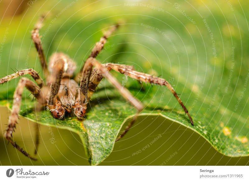 I think I spider Environment Nature Landscape Plant Animal Summer Grass Leaf Blossom Agricultural crop Garden Park Meadow Field Forest Spider Animal face