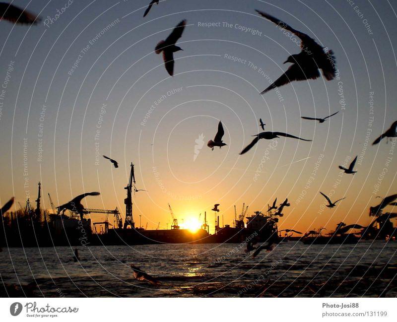 Water Sun Watercraft Bird Hamburg Jetty Seagull Celestial bodies and the universe