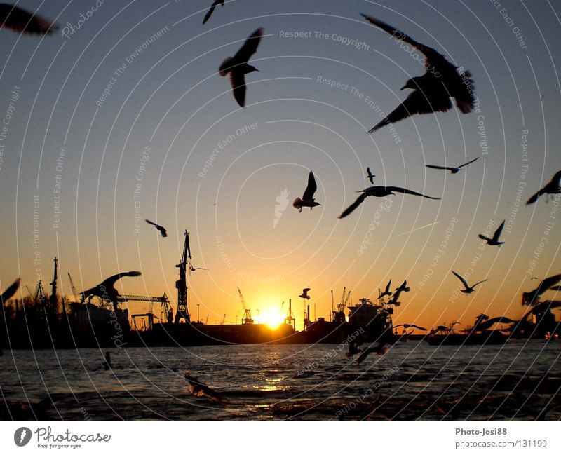Water Sun Watercraft Bird Hamburg Jetty Seagull Celestial bodies and the universe