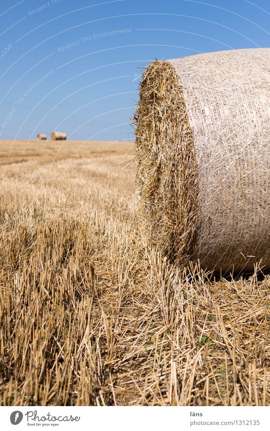 agriculture Field Straw Coil Agriculture Rolled Pressed Deserted