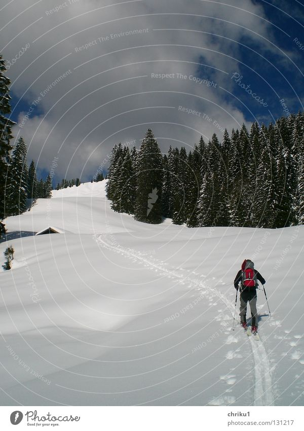 ...towards spring...? Ski tour Vacation & Travel Forest Snow track Ski tracks Man Skier Backpack Clouds Leisure and hobbies Calm Skiing Mountaineering