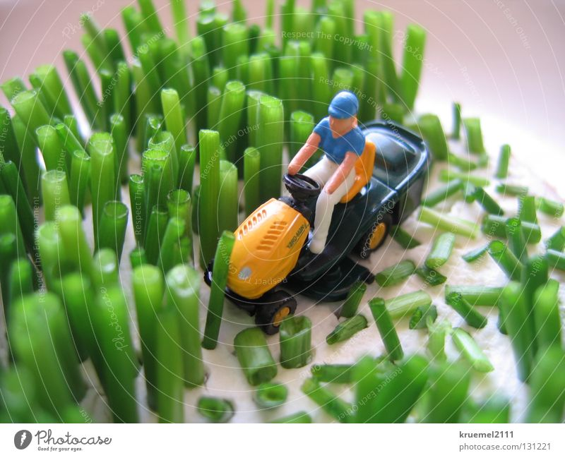 """""""Mowing the lawn"""" Meadow Green Grass Chives Cream cheese Soft Lawnmower Summer Kitchen Cut Colour Nutrition pick-up Joke Pattern"""