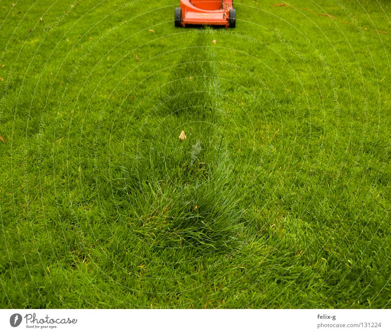 final spurt Meadow Lawnmower Green Red Tracks Remainder Flower Grass surface Last Garden Park Mow the lawn little Row Line