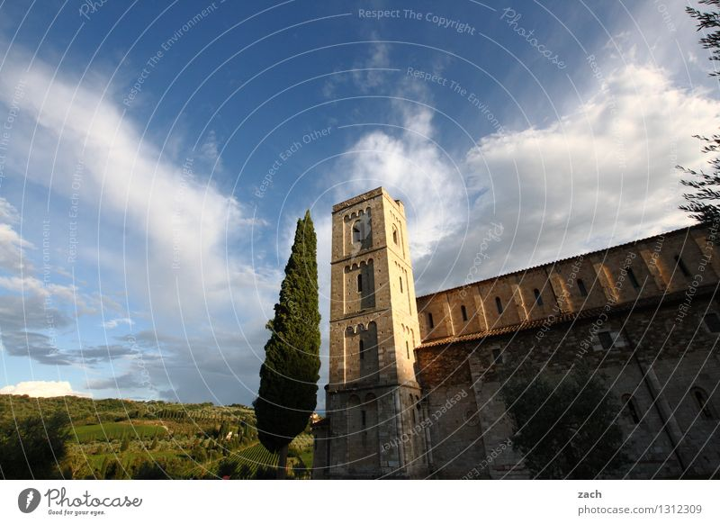 contemplation Environment Nature Landscape Sky Clouds Spring Summer Beautiful weather Plant Tree Cypress Park Field Hill Sant'Antimo Abbey Val d'Orcia Italy