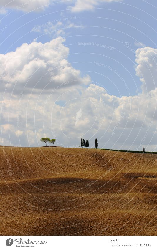 encounters Environment Nature Landscape Earth Sand Sky Clouds Summer Beautiful weather Drought Tree Cypress Field Hill Italy Tuscany Growth Blue Yellow