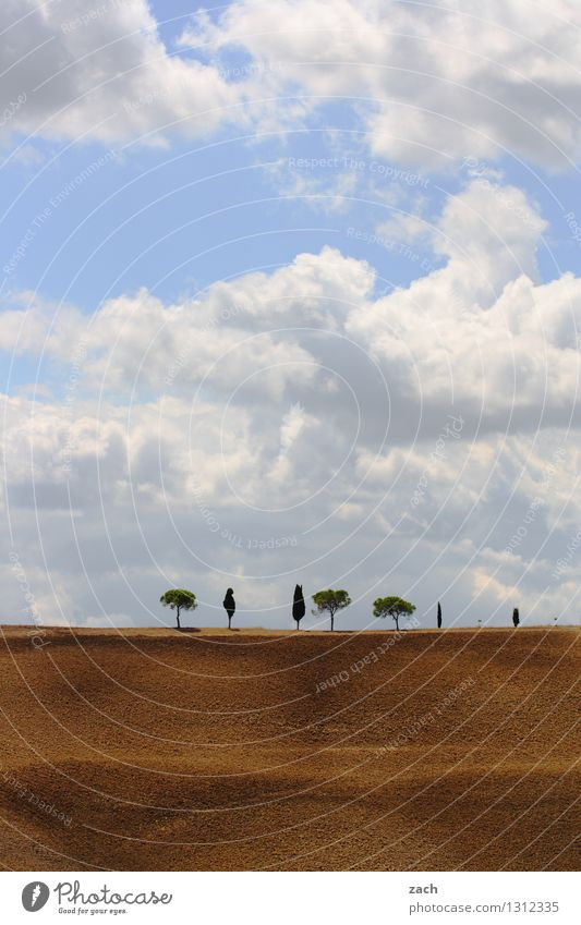 Sky Nature Blue Plant Summer Tree Landscape Clouds Environment Warmth Brown Sand Field Growth Earth Italy