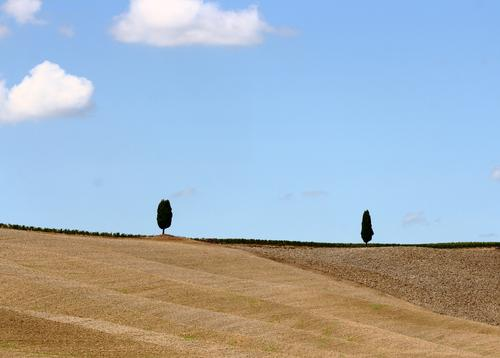 encounter Environment Nature Landscape Earth Sand Sky Clouds Summer Beautiful weather Plant Tree Cypress Field Hill Tuscany Italy Val d'Orcia Blue Brown 2