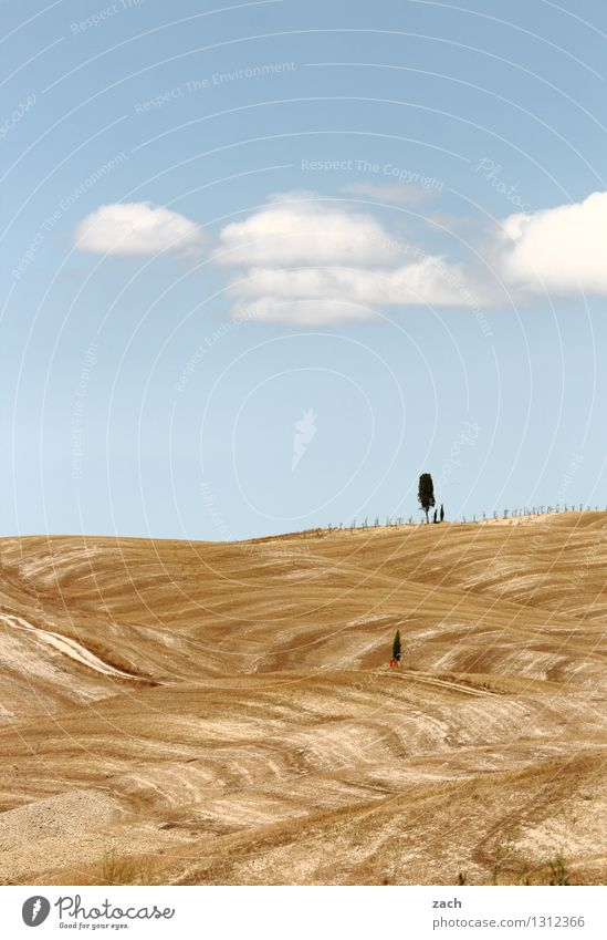 Sky Nature Blue Summer Tree Loneliness Landscape Clouds Environment Yellow Sand Field Growth Earth Individual Italy