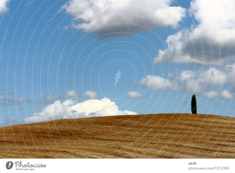 Sky Blue Plant Tree Loneliness Clouds Yellow Sand Field Growth Earth Individual Italy Beautiful weather Hill Desert