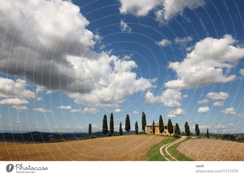 coming home Nature Earth Sand Sky Clouds Summer Beautiful weather Plant Tree Cypress Meadow Field Hill Pienza Italy Tuscany House (Residential Structure)