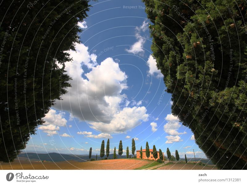 refuge Landscape Earth Sand Sky Clouds Summer Beautiful weather Plant Tree Cypress Park Field Hill Pienza Italy Tuscany Detached house Street Lanes & trails