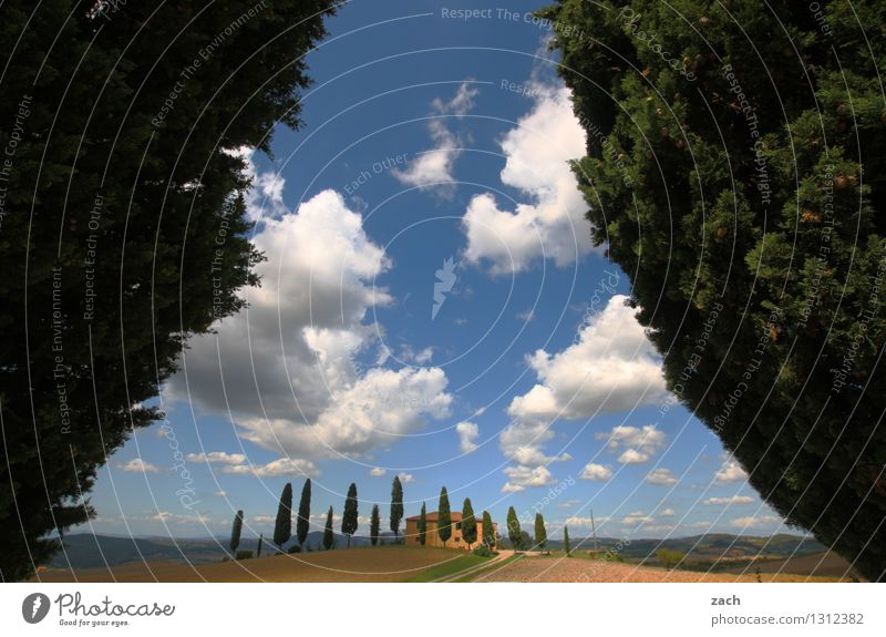 arrive Landscape Earth Sand Sky Clouds Summer Beautiful weather Plant Tree Cypress Park Field Hill Pienza Italy Tuscany Detached house Street Lanes & trails