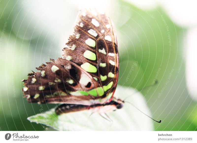green yes green... Nature Plant Animal Spring Summer Beautiful weather Tree Leaf Garden Park Meadow Wild animal Butterfly Wing 1 Observe Relaxation Flying Sit