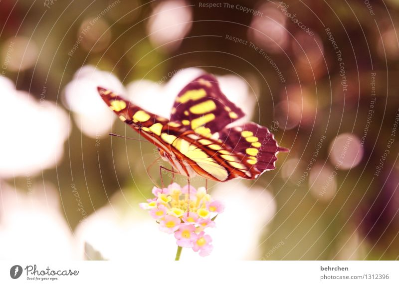 dreamland Nature Plant Animal Spring Summer Beautiful weather Flower Leaf Blossom Garden Park Meadow Wild animal Butterfly Wing 1 Relaxation Flying To feed Sit