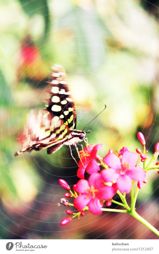 colourful Nature Plant Animal Spring Summer Beautiful weather Flower Leaf Blossom Garden Park Meadow Wild animal Butterfly Animal face Wing 1 Flying To feed