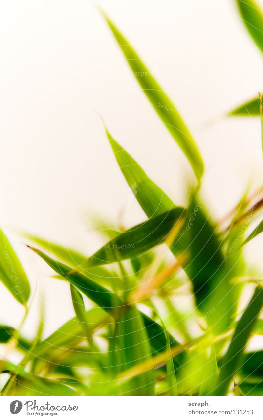 Nature Plant Green Grass Natural Background picture Growth Branch Asia Twig Blade of grass Botany Delicate Shoot Herbaceous plants Leaf green