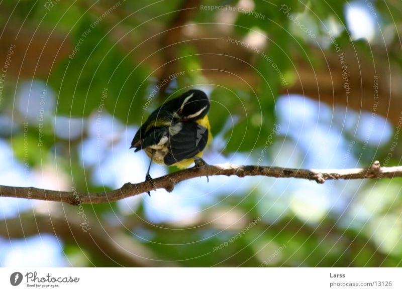 Nature Bird Branch St. Lucia