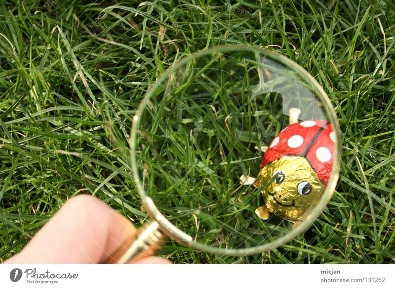 Have I seen you, you little rogue? Ladybird Candy Enlarged Magnifying glass Search Easter Easter egg Grass Sherlock Holmes Tracks Spring Summer Insect Aluminium