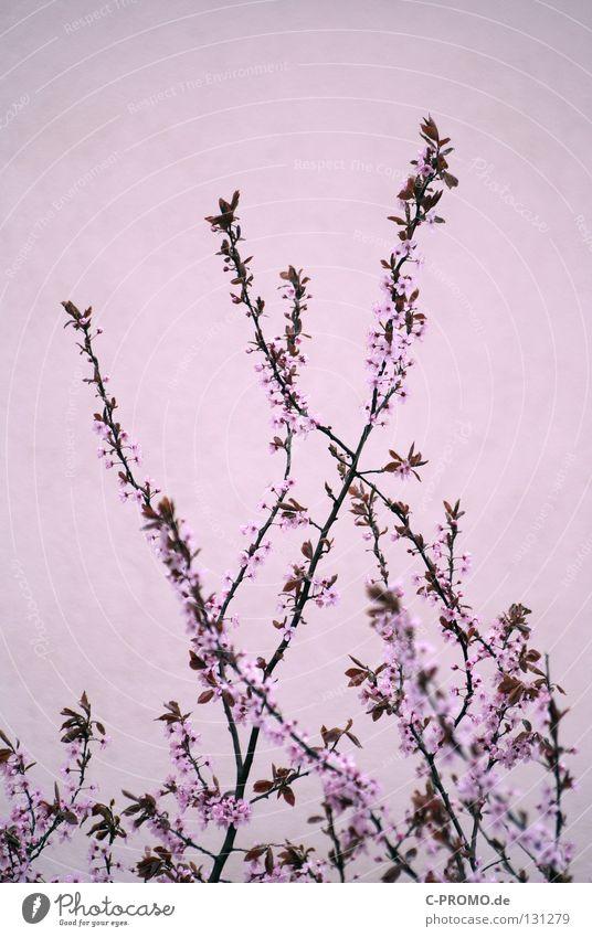 Tree Flower Life Spring Blossom Art Jump Pink Bushes Delicate Plantlet Burgundy