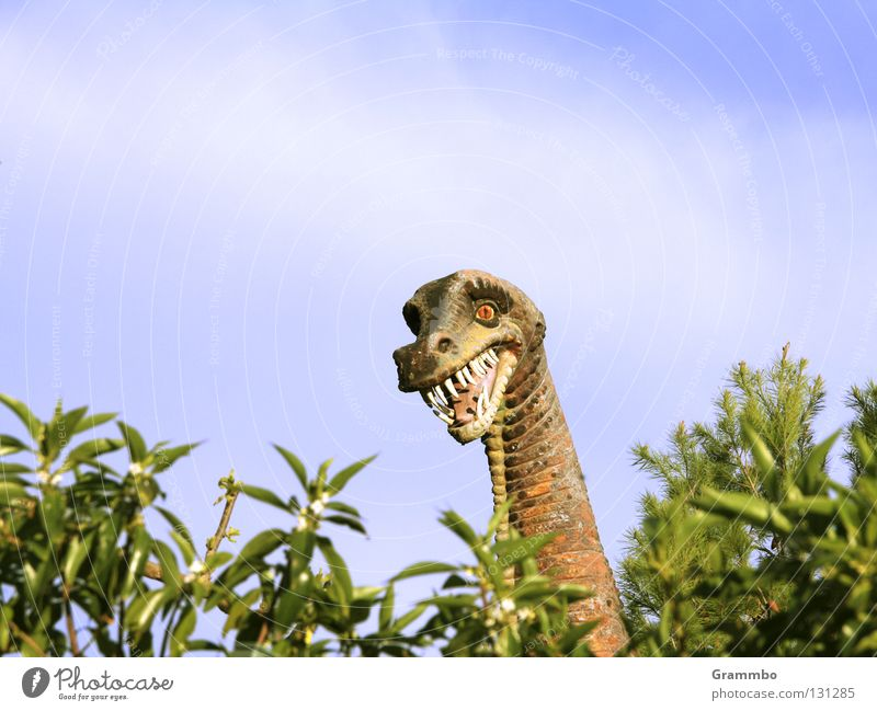 Joy Laughter Set of teeth Friendliness Neck Majorca Hedge Dinosaur Muzzle Extinct