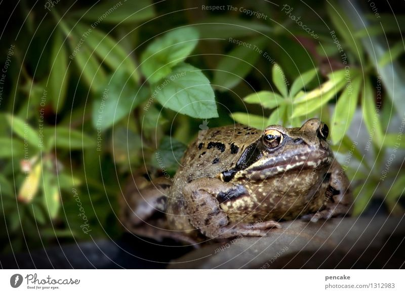Nature Plant Summer Water Animal Garden Sign Elements Pond Frog Fairy tale Silent Secrecy Jinxed Painted frog Confidant