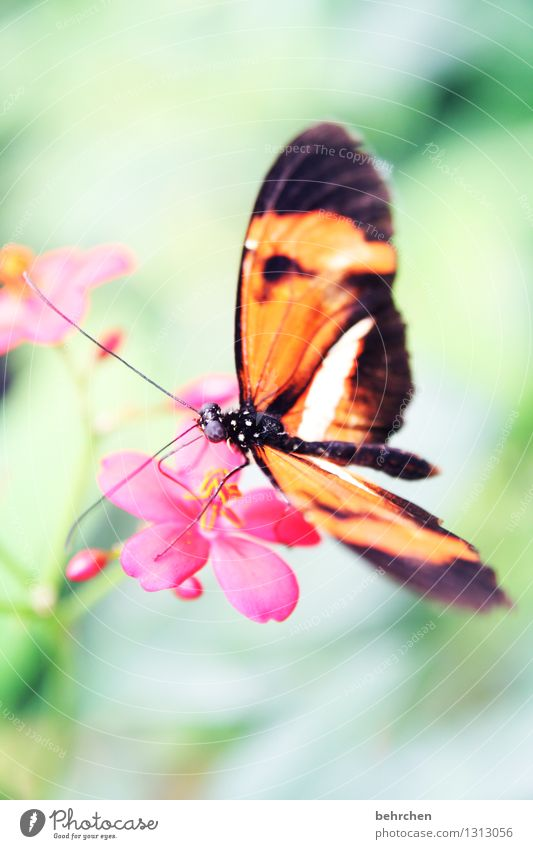 limber Nature Plant Animal Tree Leaf Blossom Garden Park Meadow Wild animal Butterfly Animal face Wing Compound eye 1 Observe Blossoming Fragrance Relaxation