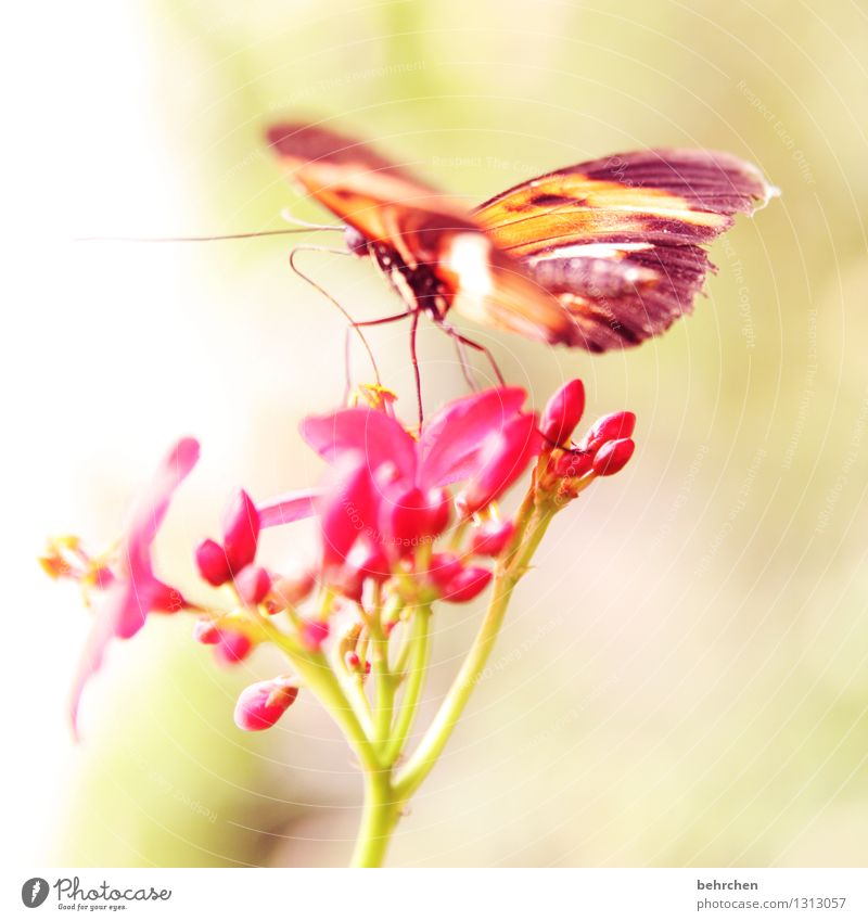 lightness Nature Plant Animal Flower Leaf Blossom Garden Park Meadow Wild animal Butterfly Wing Legs Trunk Feeler 1 Observe Blossoming Fragrance Flying To feed
