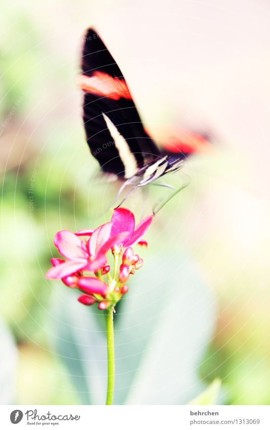 What was left of the day... Nature Plant Animal Spring Summer Beautiful weather Flower Leaf Blossom Wild plant Garden Park Meadow Wild animal Butterfly Wing 1