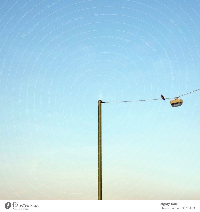 waiting loop Cloudless sky Summer Beautiful weather Town Bird 1 Animal Observe To swing Loneliness Fear of heights Boredom Ease Emphasis Colour photo