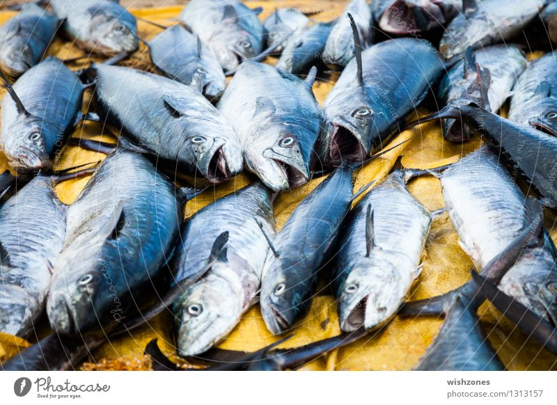 tuna fish Food Fish Nutrition Fishing (Angle) Animal Dead animal Animal face Group of animals Exotic Tourism Environmental pollution Environmental protection