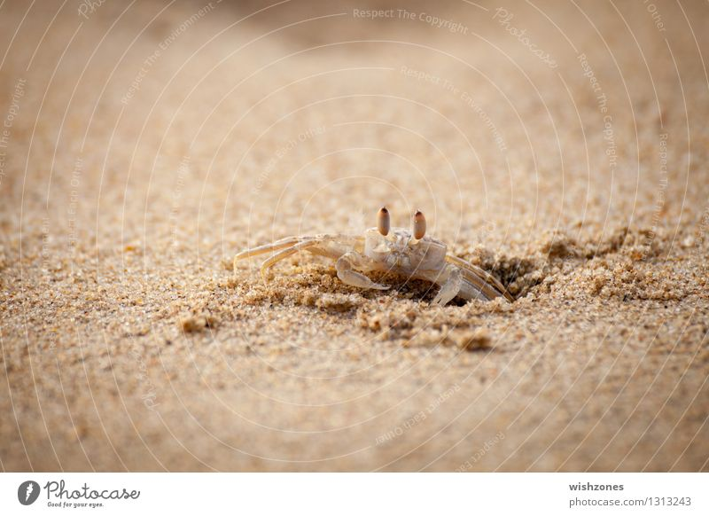 Nature Ocean Animal Beach Yellow Brown Sand Gold Nutrition Observe Protection Safety Watchfulness Hollow Effort Endurance