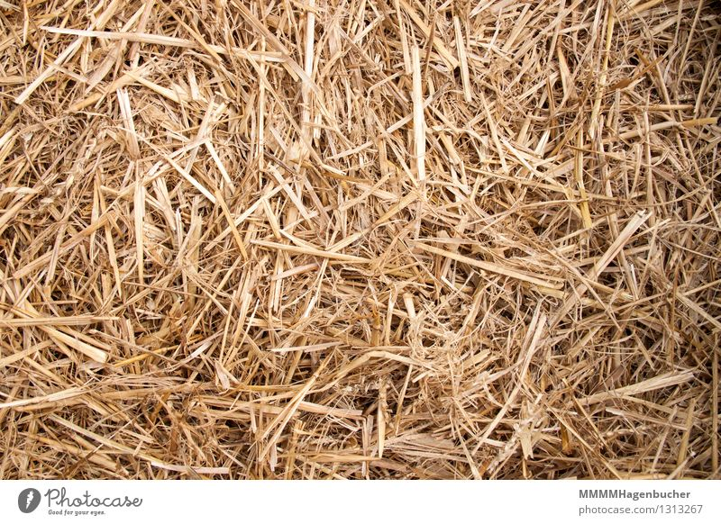straw Grain Agriculture Forestry Nature Field Dry Yellow Straw Background picture structure Heap Stack bedding golden August thrashed out Thresh Ground Farm