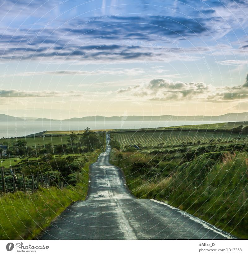 It's a long way to go Environment Nature Landscape Sky Clouds Climate Weather Rain Grass Bushes Wild plant Meadow Field Hill Coast Scotland Highlands Europe