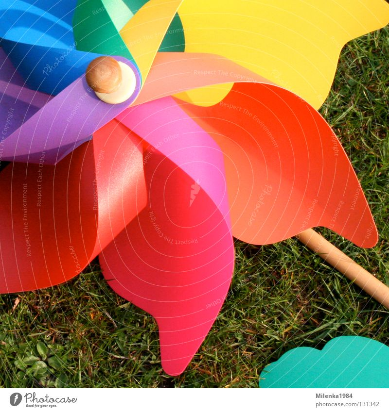 Green Blue Red Yellow Colour Meadow Grass Garden Park Moody Orange Wind Happiness Lawn Leisure and hobbies