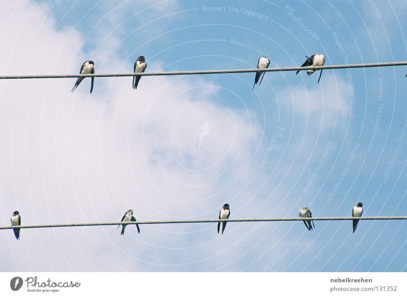 magpie meeting Black-billed magpie Bird High voltage power line Clouds Break Communicate Date Sky Vantage point