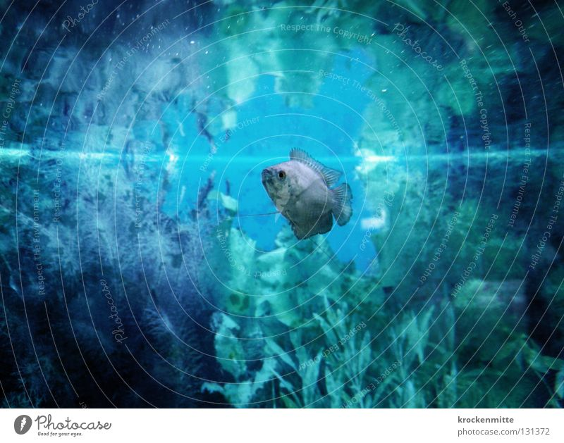 Water Blue Plant Loneliness Fish Underwater photo Dive Aquarium Water wings Surface of water